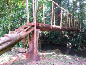 costarica-forest