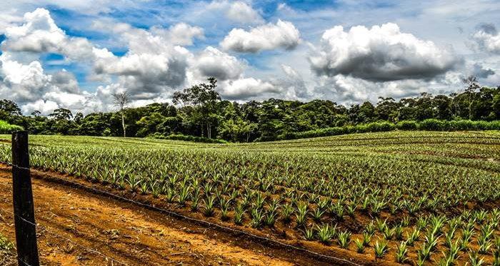 Tours near Sarapiqui Costa rica
