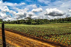 Alquiler de Quintas en Costa Rica 19